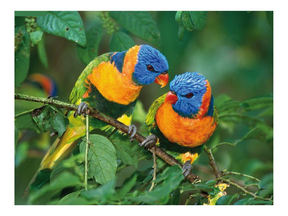 Ednet Picture Mouse Pad Birds - tapis de souris