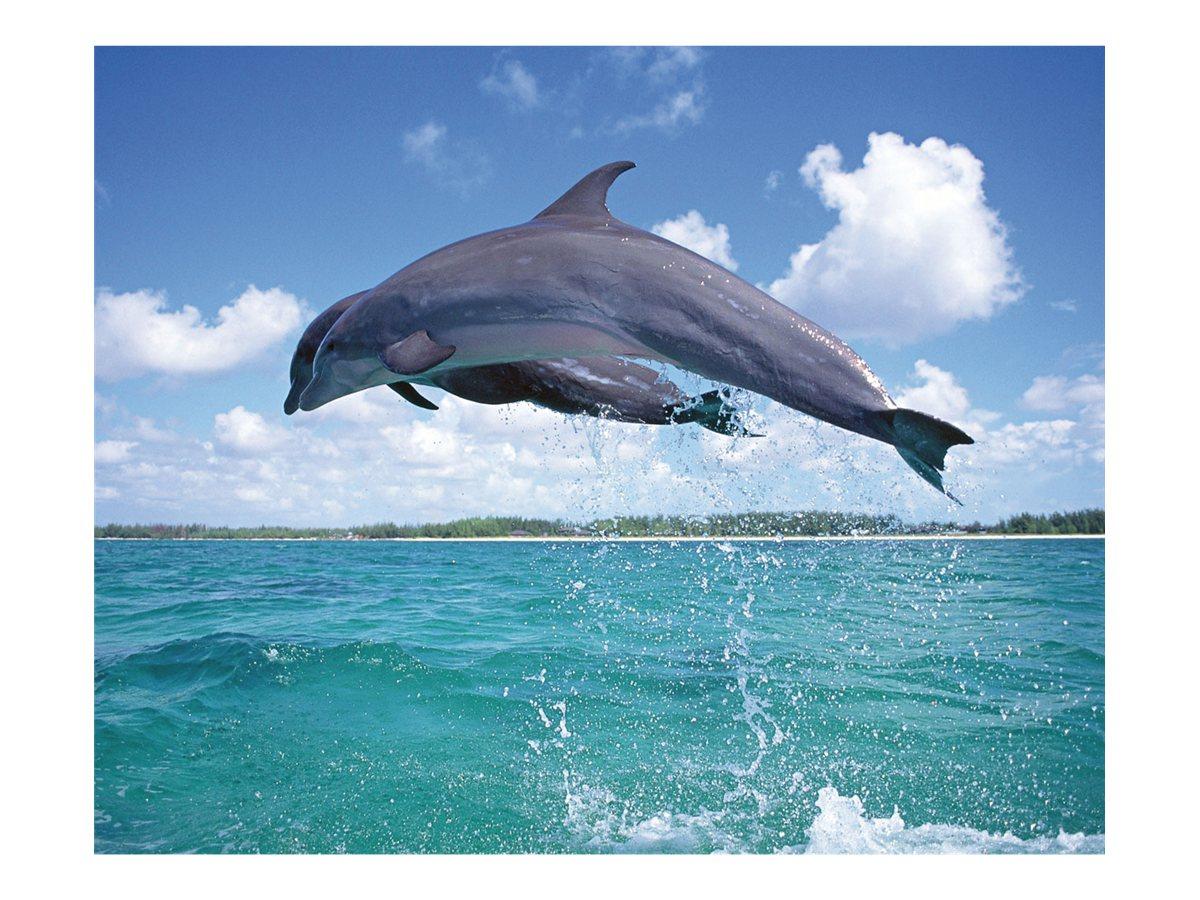 ednet Fotomotiv Delphin - tapis de souris